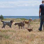 20080621 - Rastning av hundarna midsommardagen - 037.jpg